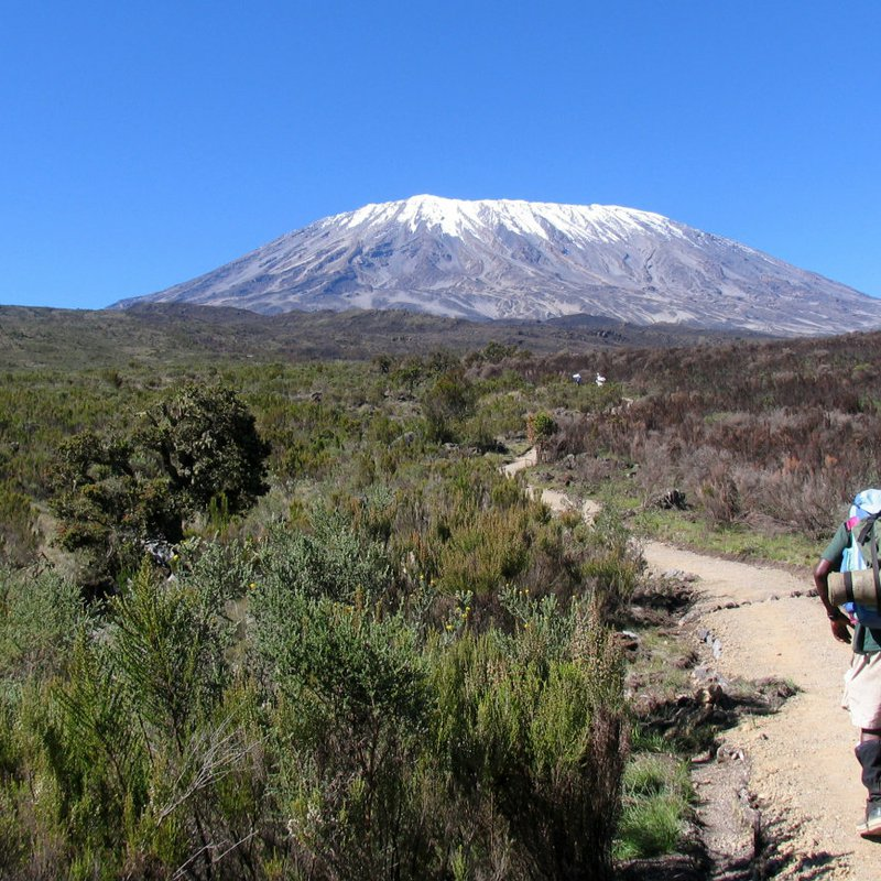 Walker on the Mount Kilimanjaro Trek