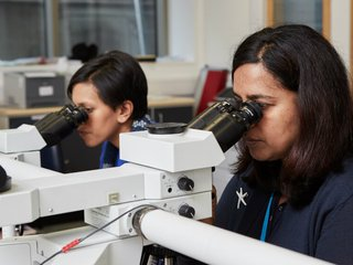 Two researchers look through microscopes side by side in a lab.